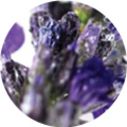 Dr Organic Bio Levendula