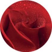 Bio Damaszkuszi rózsa