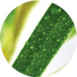 Dr Organic Bio Teafa
